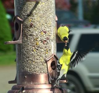 'Celebrate Urban Birds' offers neighborhood grants of $250-$500