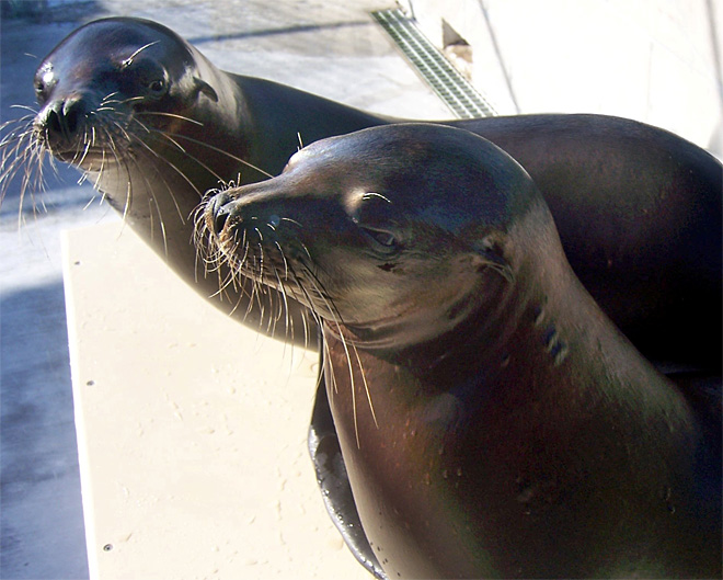 'Name the Sea Lion' contest