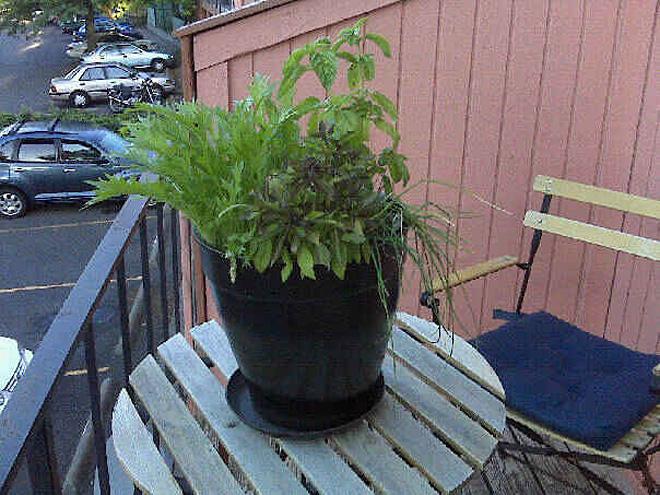 Urban Herb Gardens